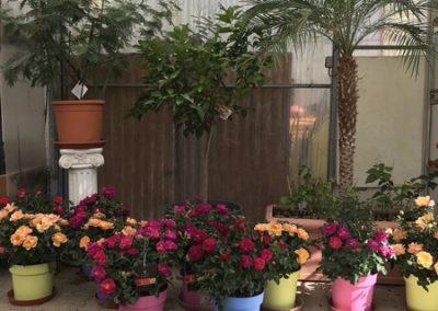 au_jardin_fleuri_été_0013