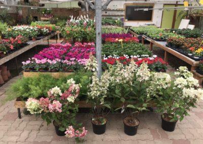 au_jardin_fleuri_été_0014