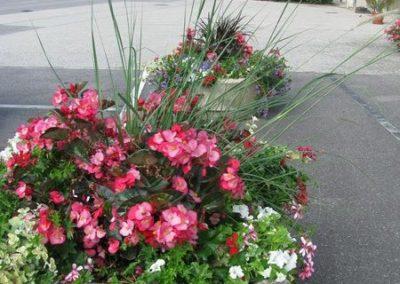 au_jardin_fleuri_54_été0006-2-e1547196781309