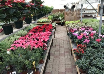 au_jardin_fleuri_54_0006