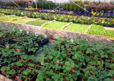 au_jardin_fleuri_54_printemps_0001