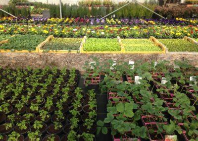 au_jardin_fleuri_54_printemps_0002