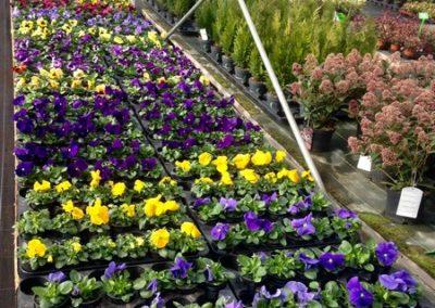 au_jardin_fleuri_54_printemps_0003