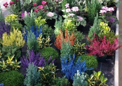 au_jardin_fleuri_automne_0018-e1547486821604