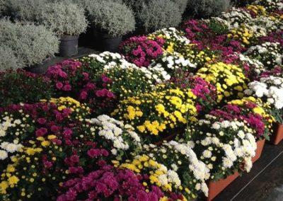 au_jardin_fleuri_automne_0019-e1547486826341