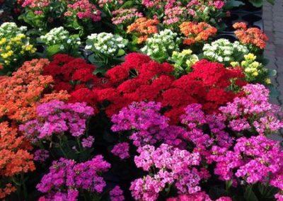 au_jardin_fleuri_automne_0022-e1547486808615