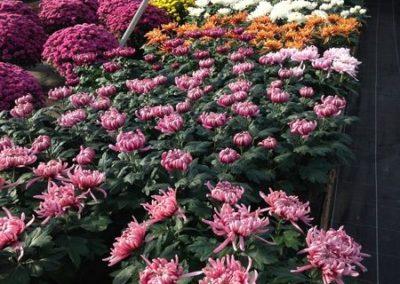 au_jardin_fleuri_automne_0029-e1547486789513
