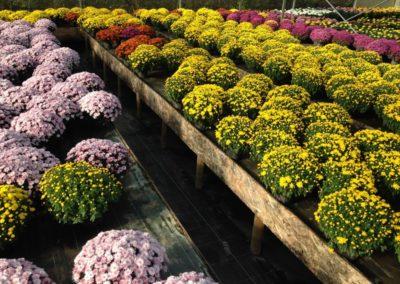 au_jardin_fleuri_automne_0030