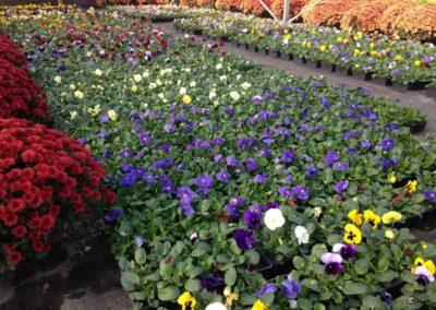 au_jardin_fleuri_automne_0032