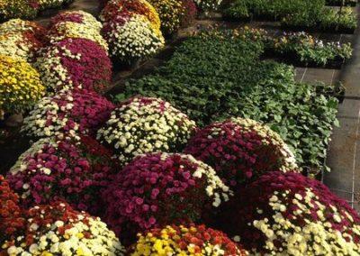 au_jardin_fleuri_automne_0034-e1547486772189