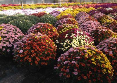 au_jardin_fleuri_automne_0035