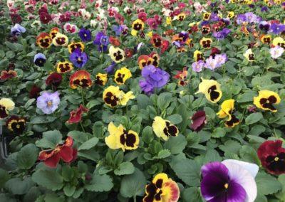 au_jardin_fleuri_automne_0042