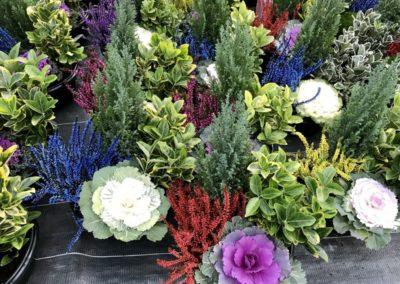 au_jardin_fleuri_automne_0044