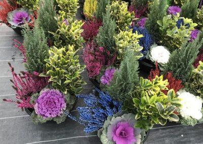 au_jardin_fleuri_automne_0045