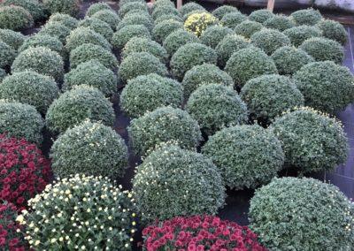 au_jardin_fleuri_automne_0051